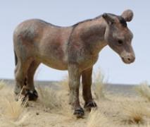 Mule - Painted